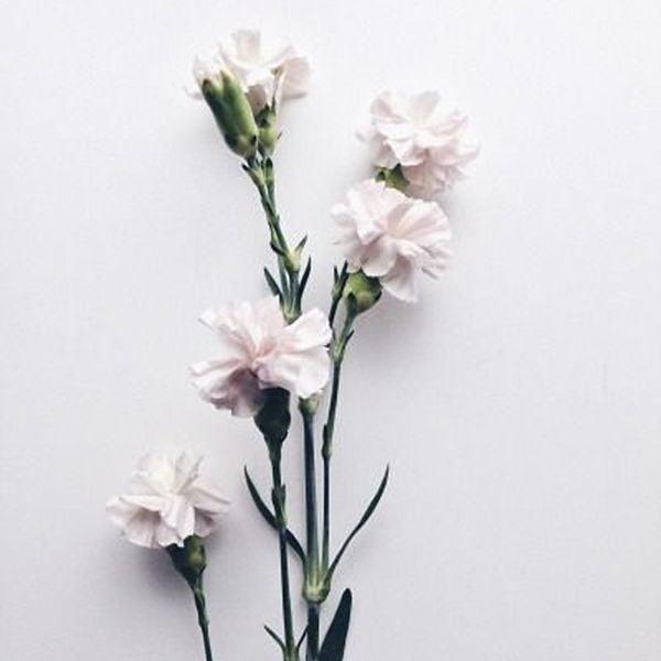 Ju Santos Instagram, artificial flower, flower arranging, flowering plant