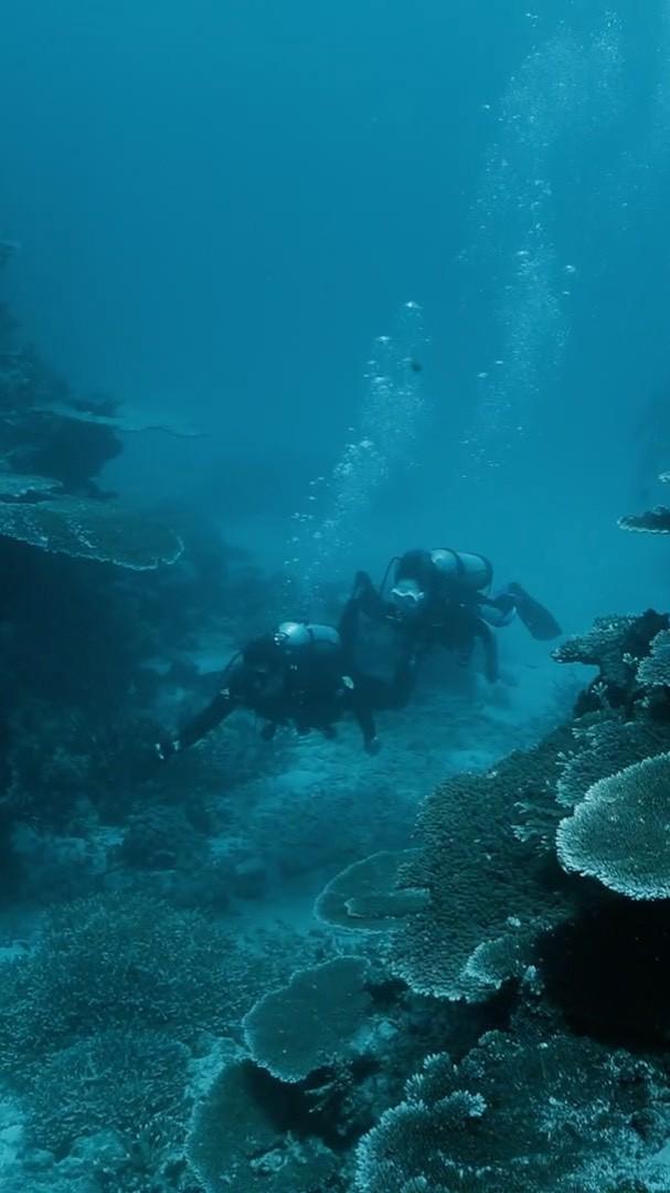 Eva Gutowski, marine biology, underwater, turquoise