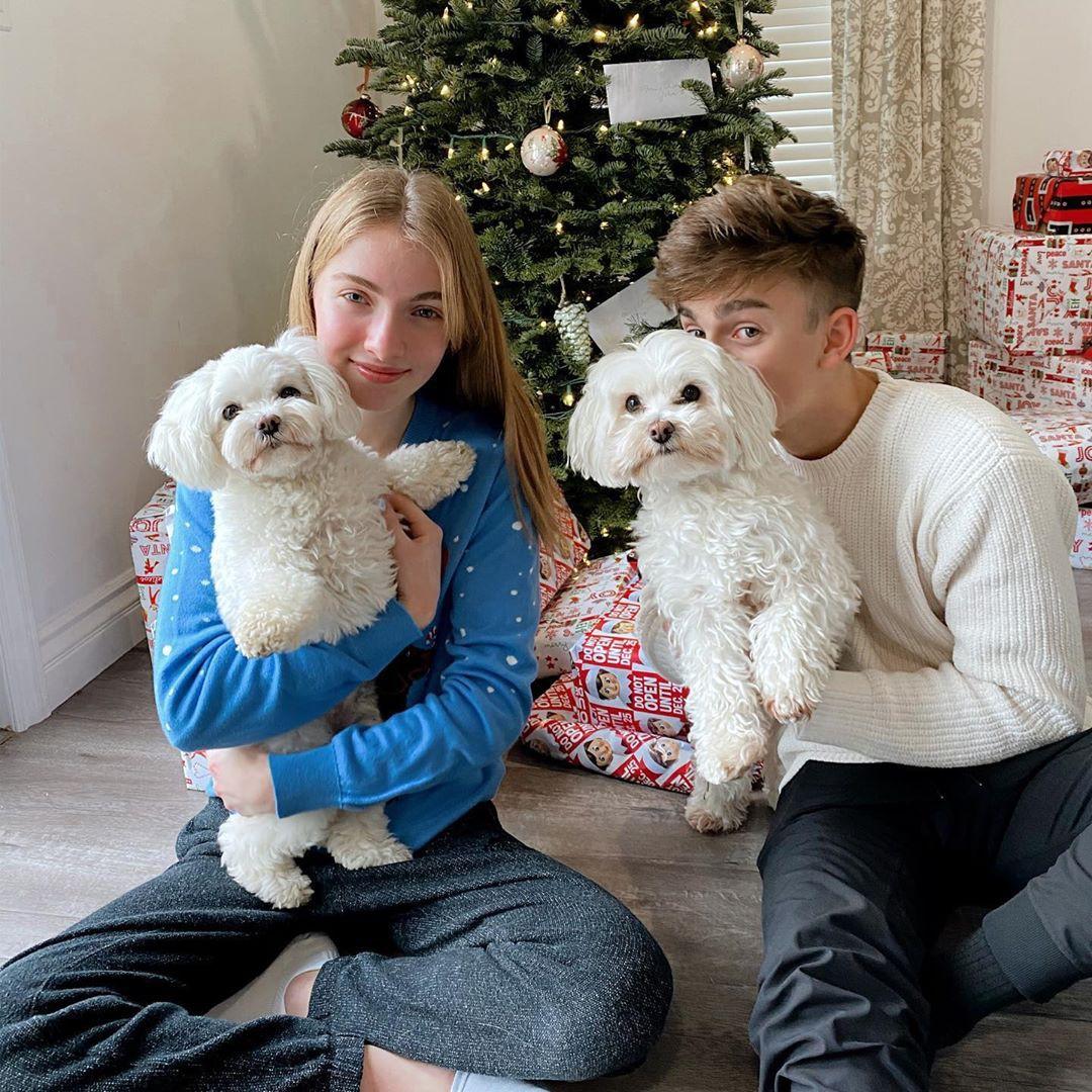 Lauren Orlando, companion dog, toy poodle, carnivore