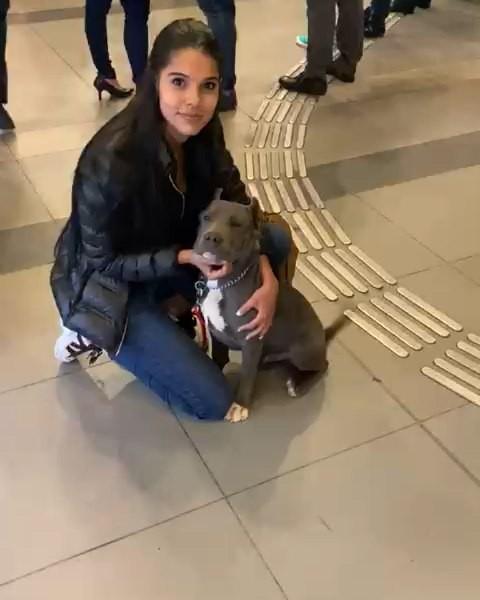 Daniela Baptista hot legs photos, staffordshire bull terrier, american pit bull terrier