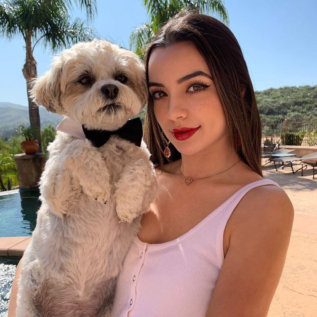 Vanessa Merrell, companion dog, interaction, puppy love