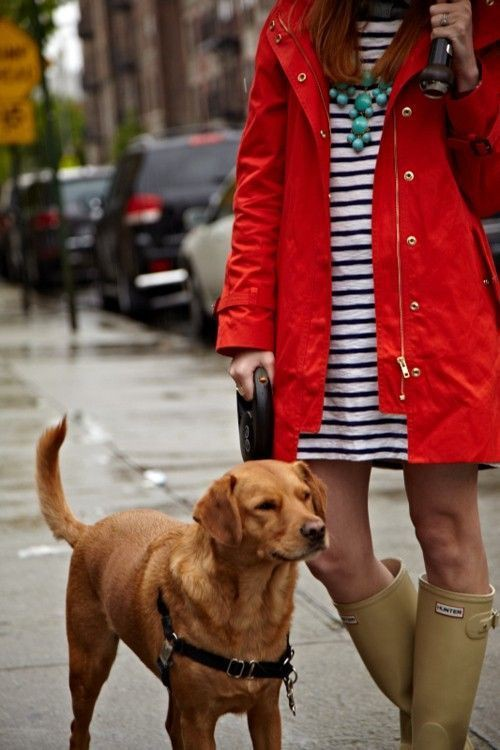 J crew red raincoat hunter boot ltd, golden retriever